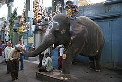 240px-pondicherry_manakula_vinayagar_temple_elephant