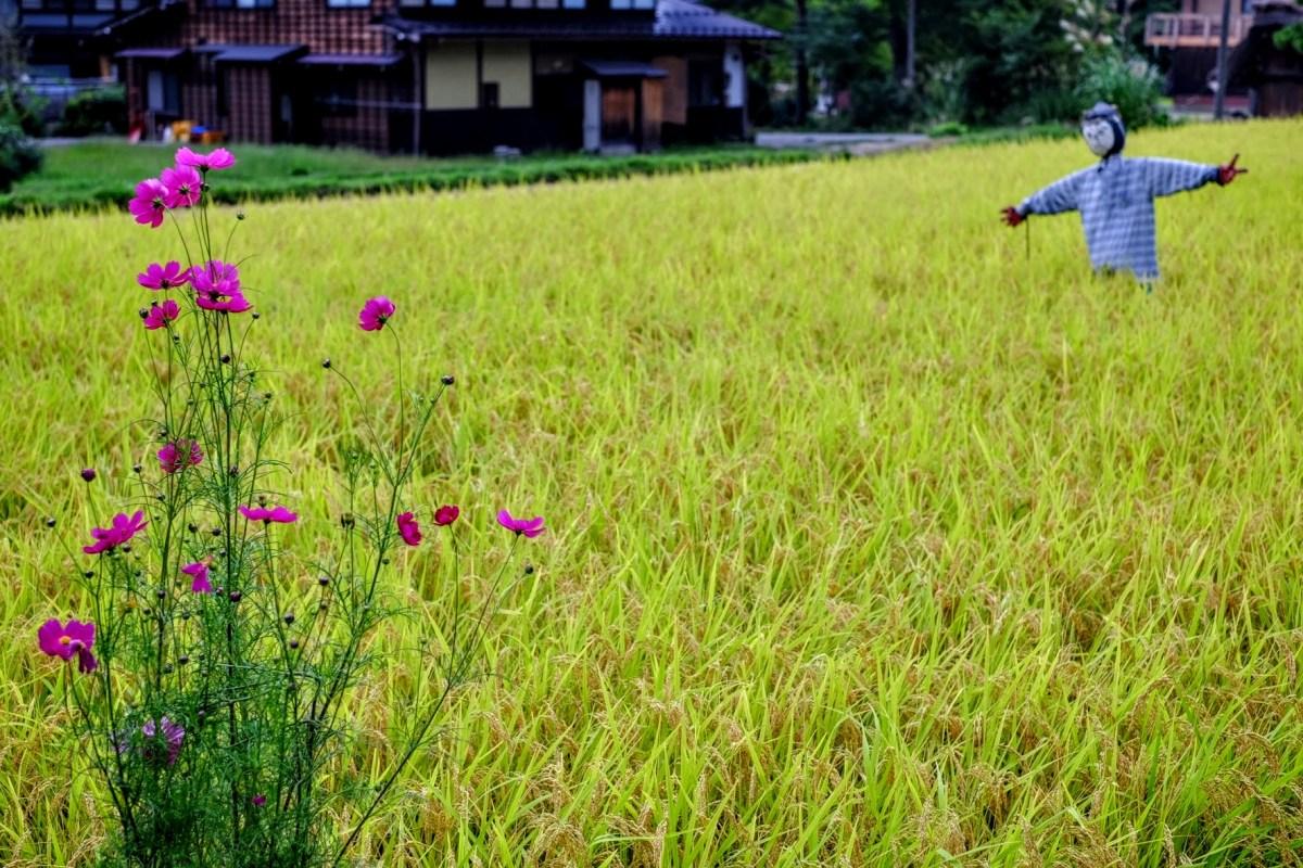 Scarecrow in Gifu, Japan