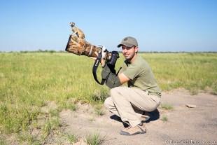 meerkats-2