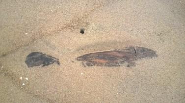 Shot at Kovalam beach
