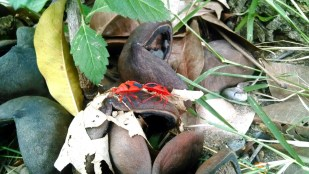 Red bugs - Its fun seeing them moving