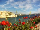 View through poppies of the Chateau d'If