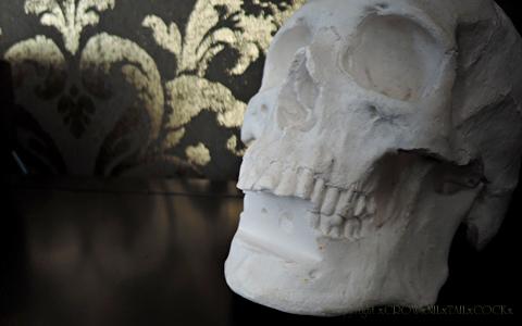 石膏製頭骨標本の修繕