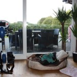 G-Wurf Marley neues Zuhause in Ankum 02