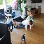 G-Wurf Marley neues Zuhause in Ankum 04