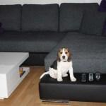 G-Wurf Paul neues Zuhause in Wanlo 08