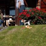 H-Wurf Happy Hennya neues Zuhause in Bodenwerder 06