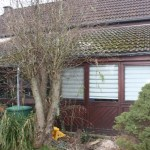 I-Wurf Icechristal neues Zuhause in Rees 04
