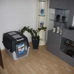 I-Wurf Icerevue neues Zuhause in Senden 08