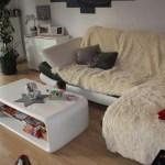 I-Wurf Icerevue neues Zuhause in Senden 11