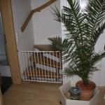 I-Wurf Icerevue neues Zuhause in Senden 13