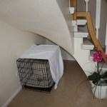 J-Wurf Jayne neues Zuhause in Papenburg 12