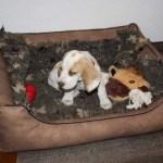 J-Wurf Jezzy neues Zuhause in Meppen 12