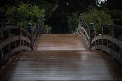 橋に降る雨