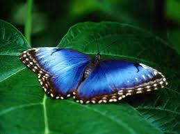 butterfly 66