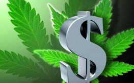 marijuana-money-263x164