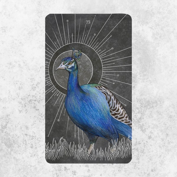 Birds Oracle Deck 2 | Golden Blue