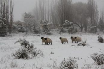 Eindelik Snow July 2012 093