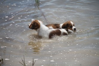 Luke and Finn in the water. Photo courtesy of Henna Palmunen.
