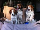 Amica, Toni, Nelle in car