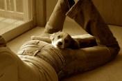 Amica resting