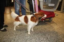 Kooiker from Switzerland Arrives at Helsinki's International Airport.