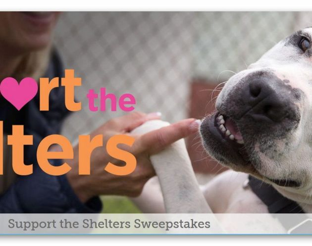 "Bissell Pet Foundation ""Support the Shelters"" Sweepstakes"
