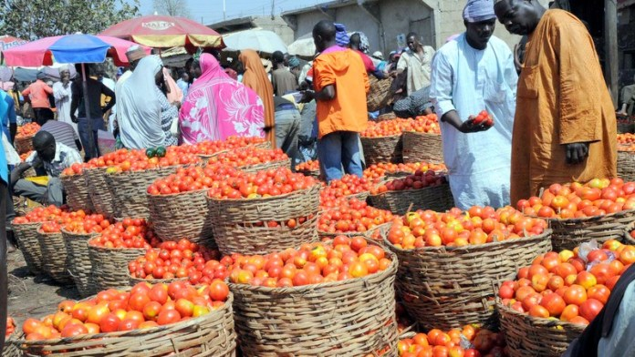 tomato importation