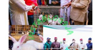 Imo State Governor empowers unemployed youths with rabbits