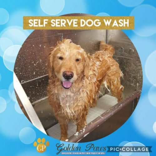 Self serve dog wash golden paws 732 440 4385 oceanport nj 07757 beka erica sio solutioingenieria Choice Image