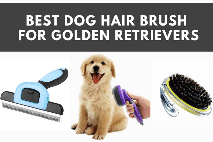 Best Dog Brushes For Shedding Golden Retriever 2020 Golden Retriever Love