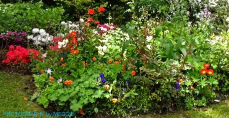 Monets trädgård - Blandade blommor