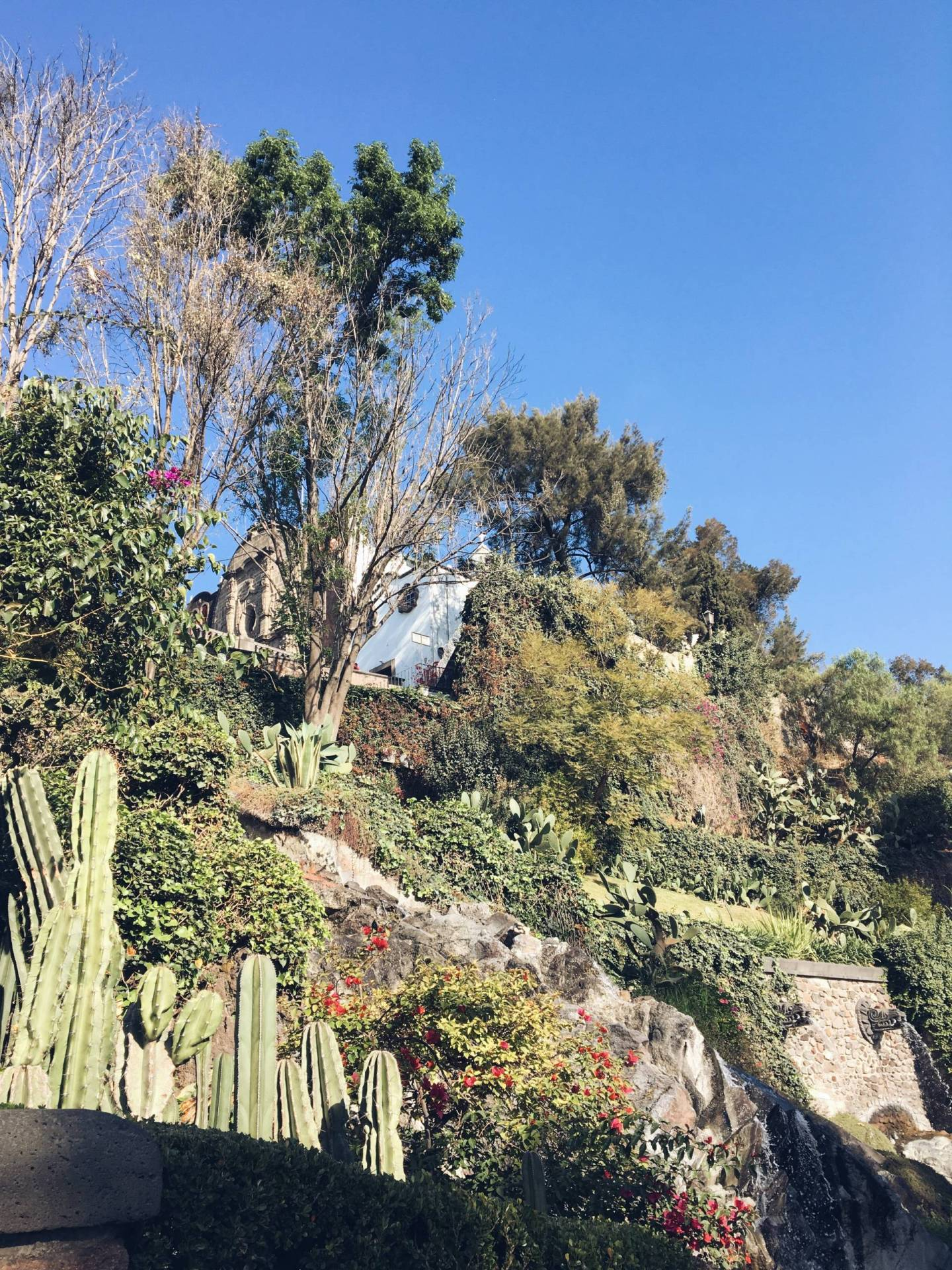 Garden at Our Lady of Guadalupe in Mexico City