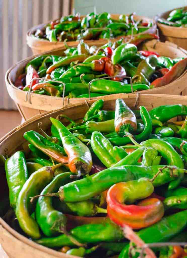 Bushels full of New Mexican green chile to be roasted for New Mexico Green Chile Roasting 101