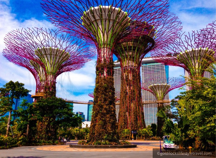 The beautiful Supertree Grove at Garden By The Bay