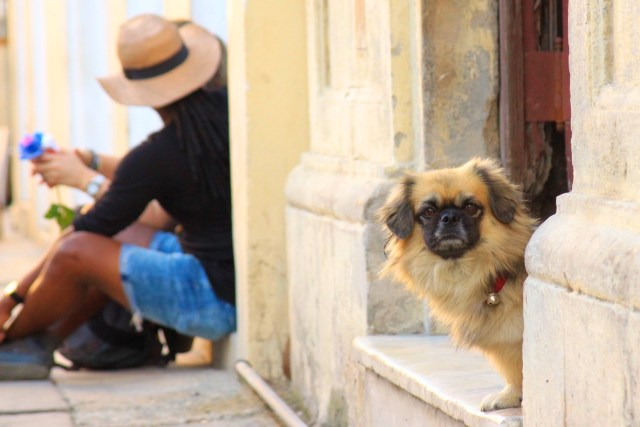 curious-dog-havana-close