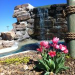 Tulips & Mini Golf