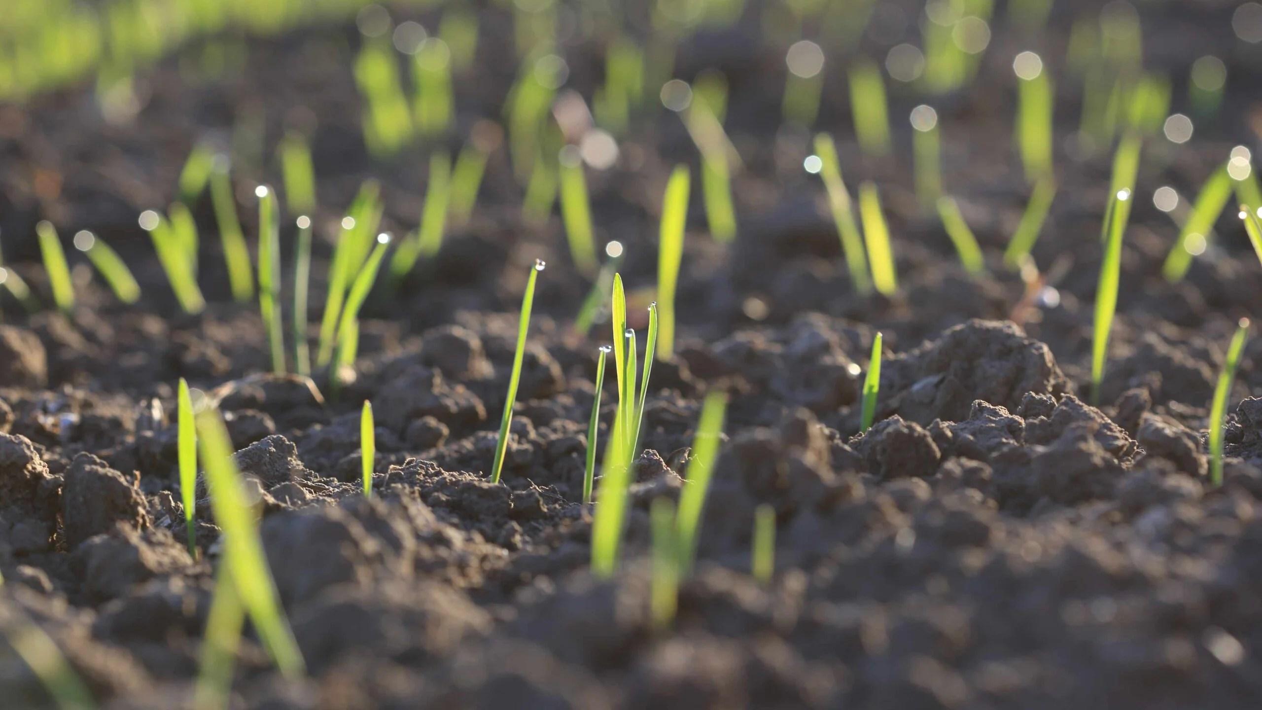 planting new grass