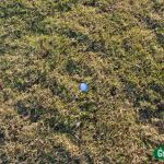 Wild Dunes Grass-6157