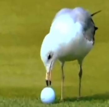 The Seagull Incident At The 1998 Players Championship