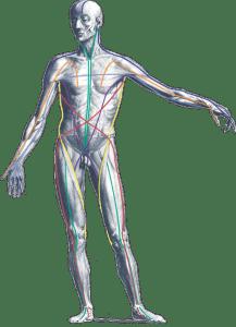 anatomy pic