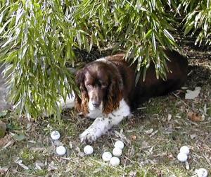 Murphy life lessons golfteacher.com