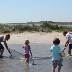Fish Collecting - Seining at Sand Flat