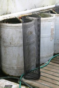 Photo of a fry cage standing next to a 55-gallon vat.