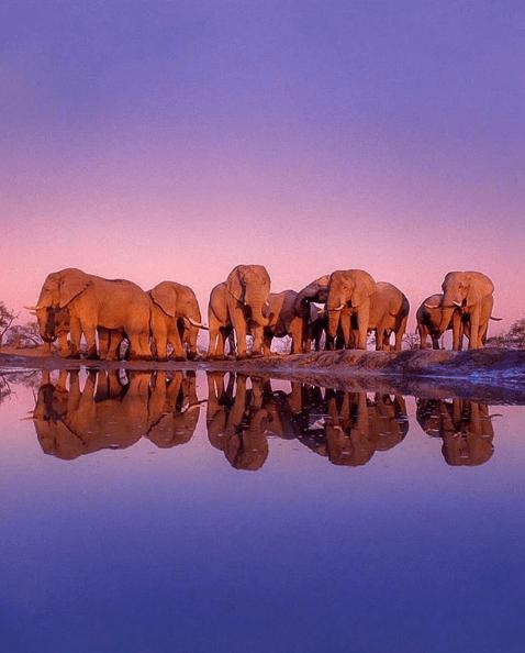 botswana-travel-safari-2020