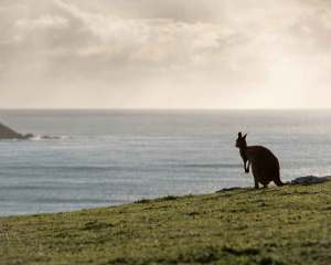 kangaroo-island-south-australia-bucket-list