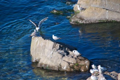 Hanging out with the Gulls