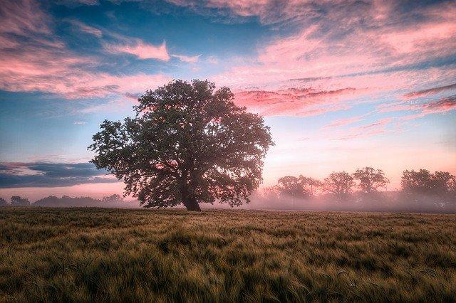 Нидерландский ландшафт. Фото из интернета