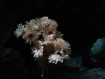 "© Golnaran, ""Mountain Flowers"", Resized, original size: 2560×1920 pix, 2014."