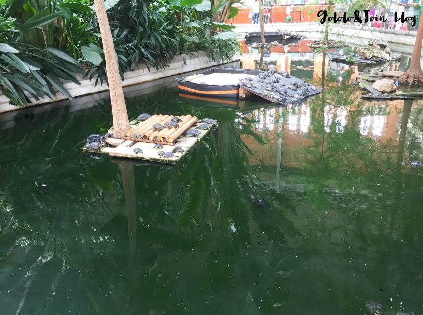 tortugas-peces-estación-atocha-jardin-tropical-visitas-con-niños-excursiones